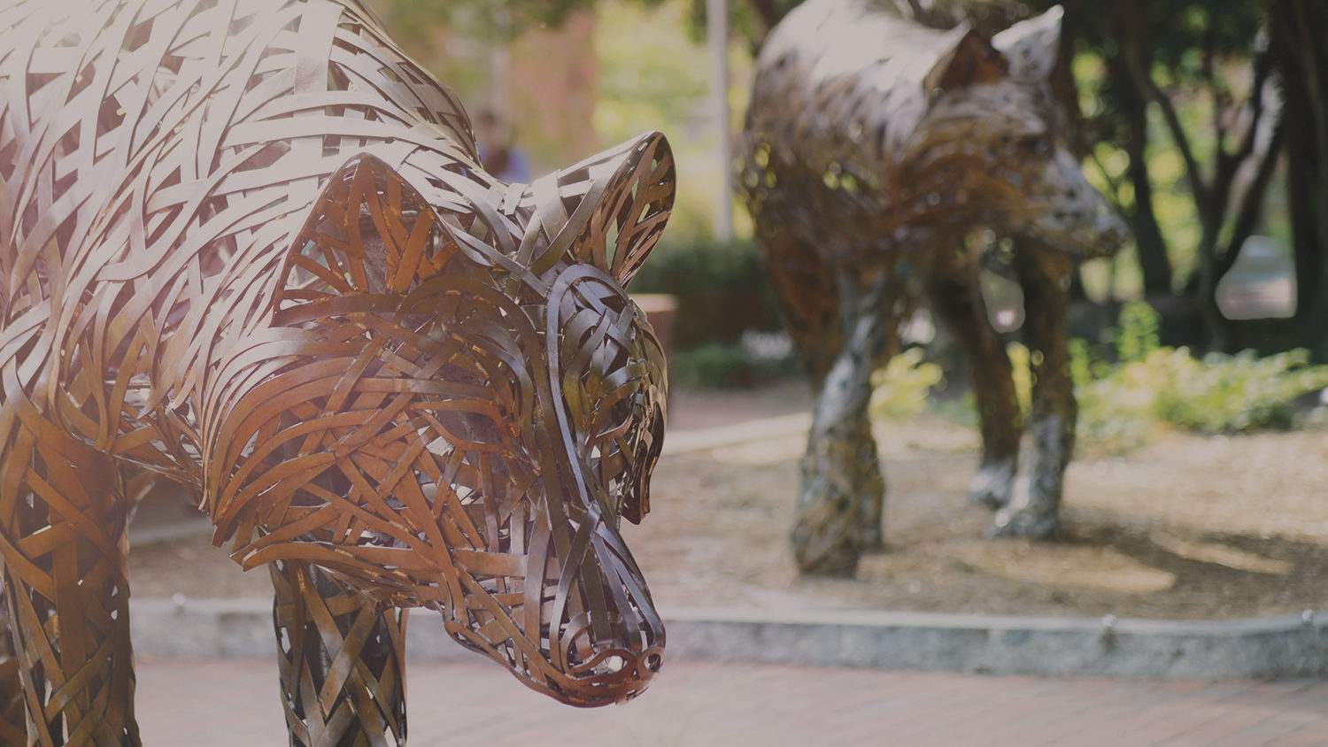 Copper wolf statues on NC State's campus